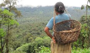 Indígenas awá son víctimas de atrocidades en sus hogares