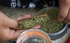 Así será el cultivo, producción y fabricación de productos de marihuana para uso medicinal