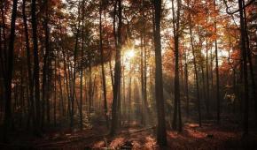 El planeta tierra en déficit ecológico