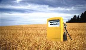 Declaración Foro-Taller Agrocombustibles: Palma Africana y sus efectos en la Seguridad Alimentaria
