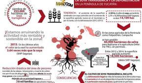 Los apicultores mayas entre la soya transgénica de Monsanto y el fallo de la corte