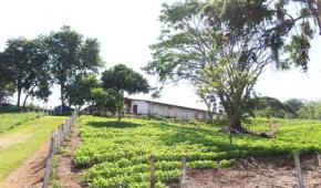 Primera finca indígena autosuficiente en Colombia