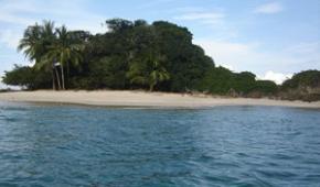 Organizaciones ecologistas piden un Ministerio del Ambiente para Panamá