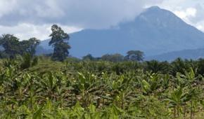 El paro agrario y la lucha campesina por la tierra en Colombia